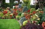 Вечнозеленые растения для сада тенелюбивые