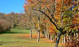 Яблоня уход осенью в сибири