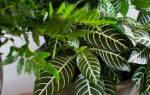 Декоративные комнатные лиственные растения