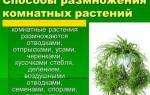 Комнатные растения и способы их размножения и