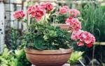 Комнатные растения приносящие в дом благополучие и богатство
